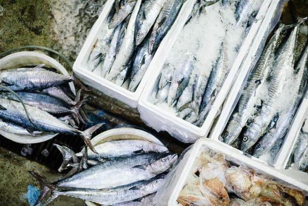 Un grupo internacional de investigadores diseña baterías sostenibles a partir de colágeno de pescado