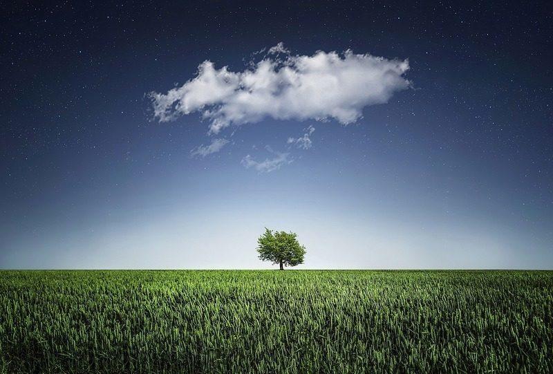 Una recuperación verde, clave para que sea sostenible y duradera en la era de la COVID-19