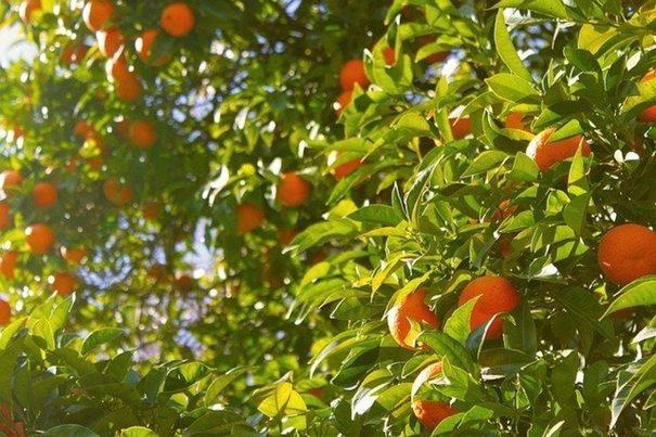 Una empresa andaluza presenta un modelo sostenible de agricultura bioinclusiva