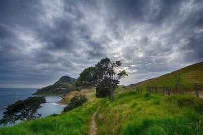 Nueva Zelanda, el primer país del mundo en exigir informes financieros de riesgo climático