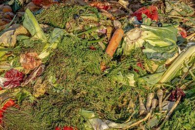 Valladolid: Medina del Campo cederá composteras a los vecinos para reducir residuos