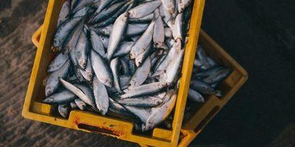 Aumenta el número de capturas procedentes de pesquerías sostenibles en el mundo