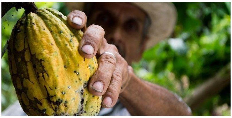 Investigadores españoles obtienen bioplásticos iridiscentes utilizando residuos de algodón y cacao