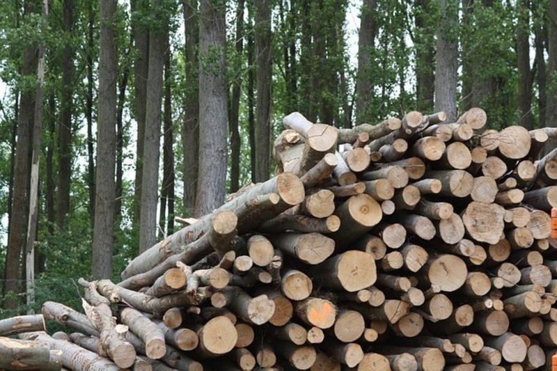 Desarrollan  una tecnología para producir biocombustibles fiables y competitivos a partir de biomasa residual