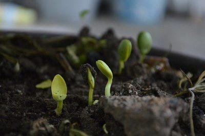 Una investigación prueba que el compostaje de residuos orgánicos y subproductos mejora la calidad de los cultivos