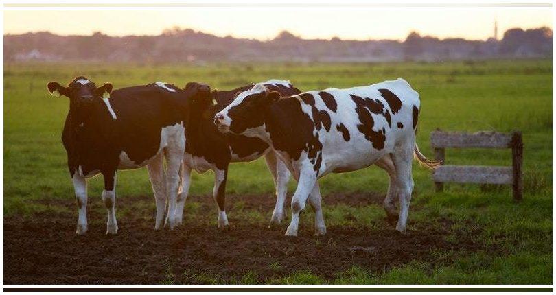 Castilla  y León: Presentan candidatura para un proyecto de economía verde en una ganadería de Zamora