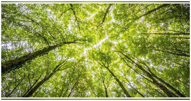 La investigación lo confirma: cuidar la biodiversidad es más rentable económicamente que explotarla