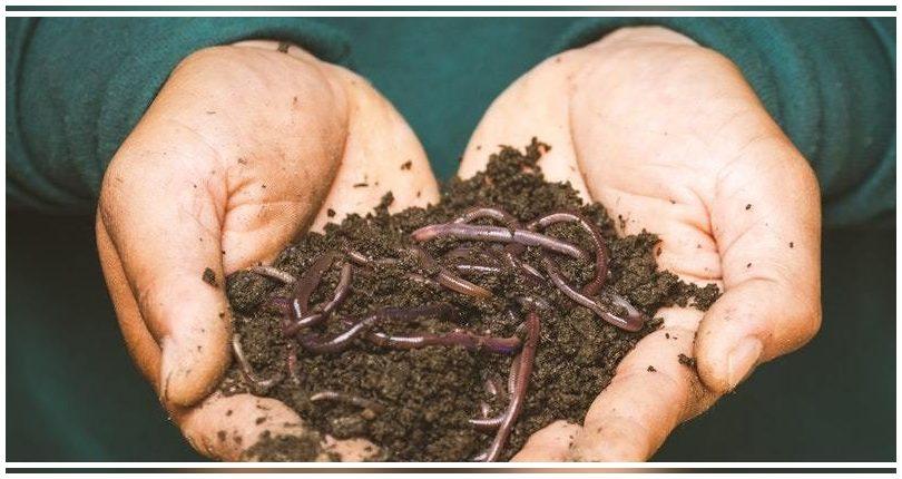 Científicos españoles identifican el ADN de los microorganismos que intervienen en el compostaje