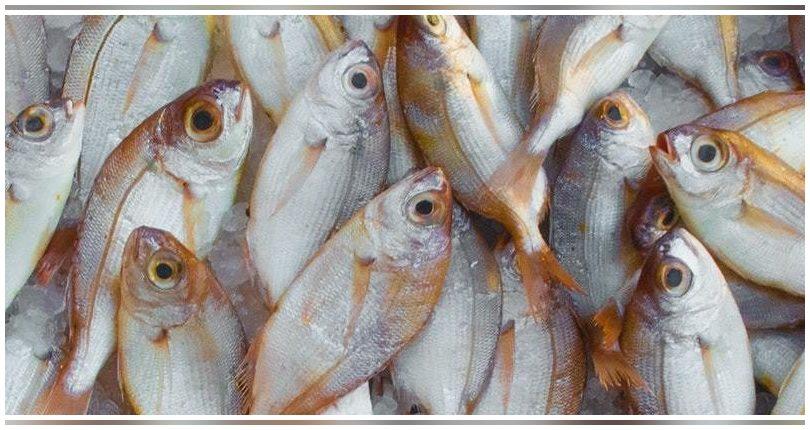 Un estudio español revela los efectos de la ingesta de microplásticos en peces en cautividad