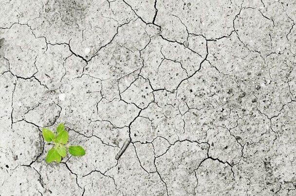 Ganar la batalla climática para liderar la economía mundial