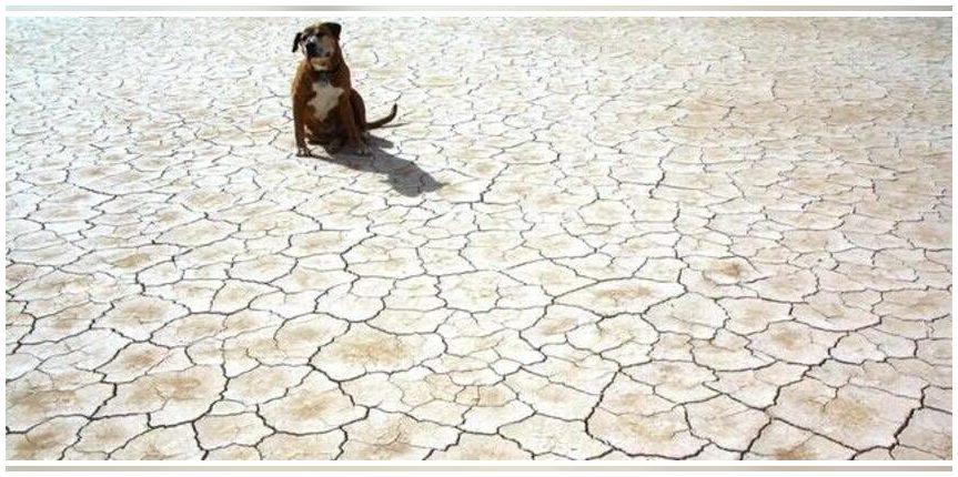 Un estudio avala que una de cada tres muertes por calor están asociadas a la crisis climática