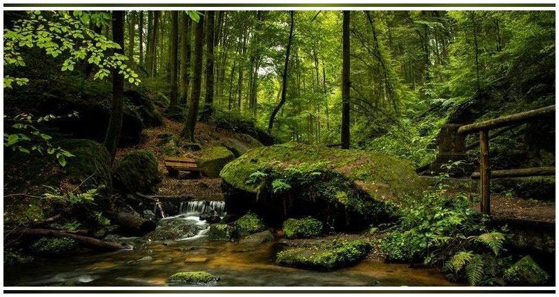 Un informe de la Eurocámara propone la redacción de una ley europea de biodiversidad