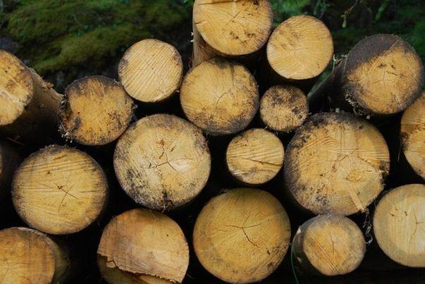 Baleares: El ITS financia un estudio de alternativas de gestión de residuos de madera