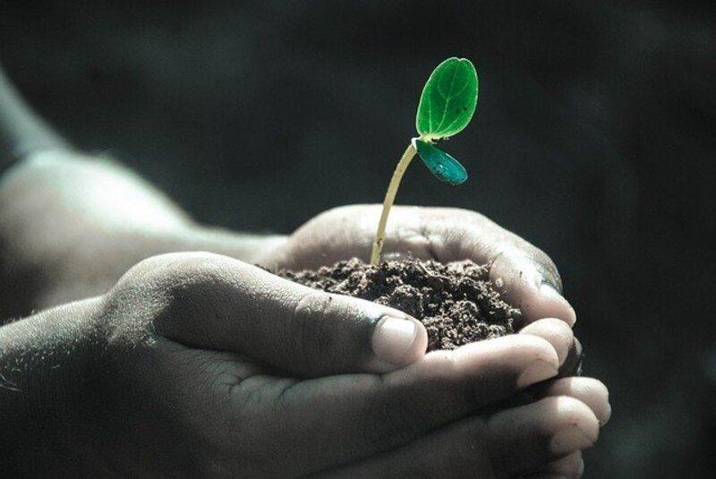 Fundación Biodiversidad lanza una línea de apoyo a iniciativas de emprendimiento sostenible