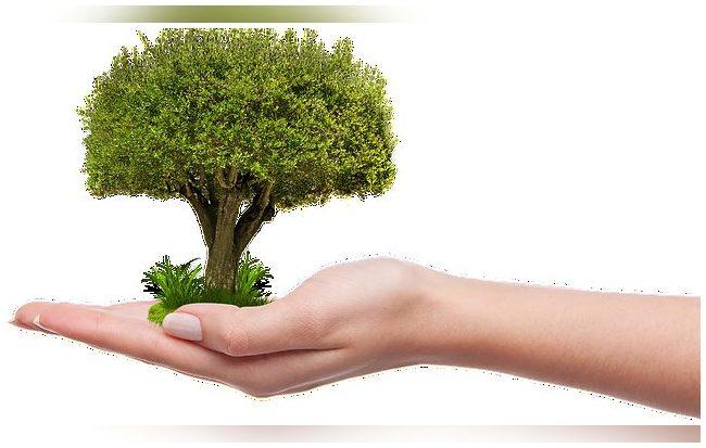 Publicado el RD que regula el Fondo de Restauración Ecológica y Resiliencia