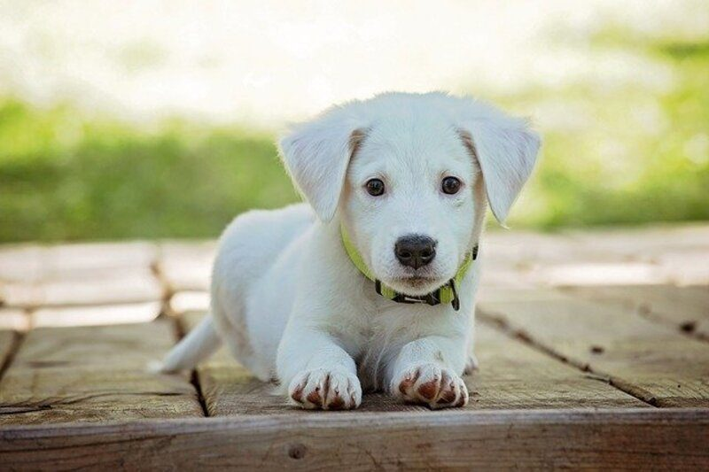 Murcia: Una campaña de Ecovidrio anima a reciclar con un premio para mascotas