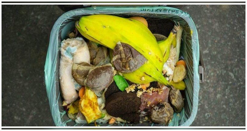 Valencia: Crece el reciclaje, aunque solo el 60% de los residuos del contenedor marrón son orgánicos